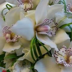 белая орхидея видео